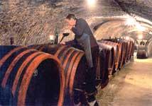 Венгрия. В винных погребах